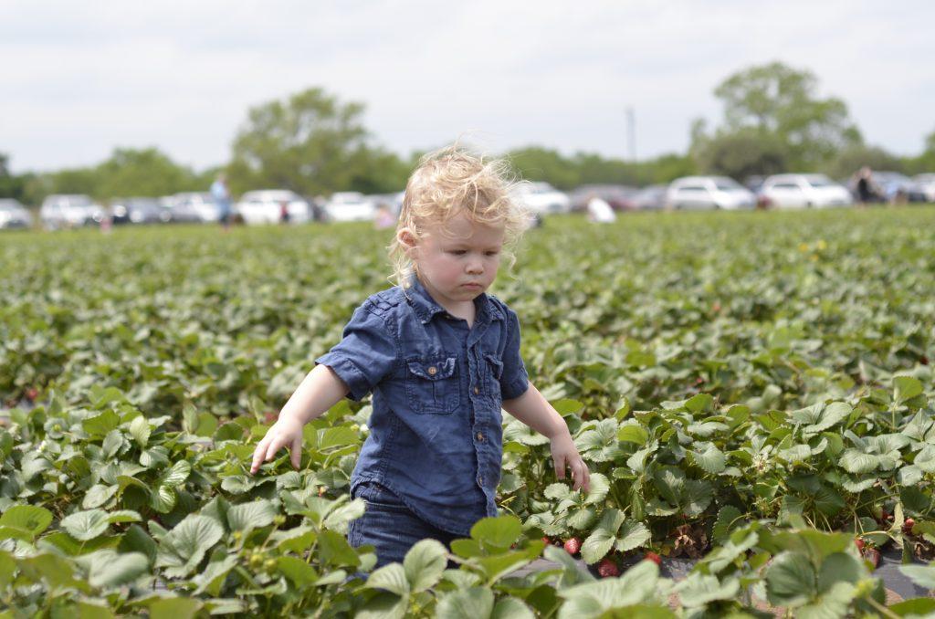 Sweet Berry Farm | Austin, Texas | Strawberry Picking | Hi Lovely