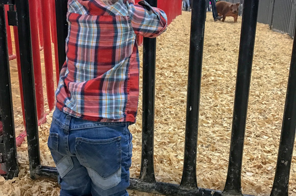 Family Friendly Guide to the San Antonio Rodeo | Hi Lovely